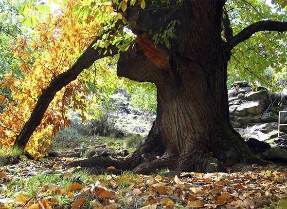 Itinerarios de Senderismo: Subida al Chullo y Sendero del Castaño de Laroles (28-09-2013)