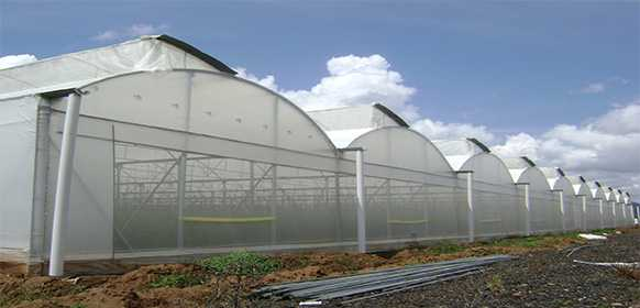El Grupo Ecologista Cóndor pide que se frene la expansión de los invernaderos