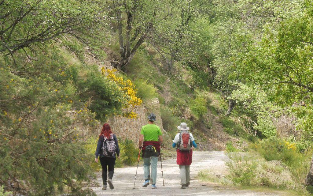 Ruta de Marcha Nórdica y de Senderismo por la Dehesa del Camarate (El Bosque Encantado)  Lugros (Granada) Domingo, 26 de Noviembre 2017